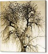 Bird Tree Fine Art  Mono Tone And Textured Canvas Print