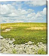 Blueberry Field With Blue Sky And Clouds In Maine Canvas Print