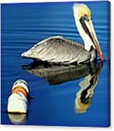 Blues Pelican Canvas Print