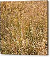 Brown Grass Texture Canvas Print
