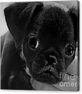 Brussel Griffon Puppy Painting Canvas Print