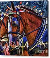 Budwieser Clydesdale Canvas Print
