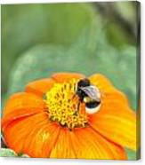 Bumble Bee 01 Canvas Print