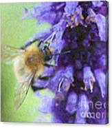Bumblebee On Buddleja Canvas Print
