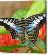 Butterfly Beauty And Grace Canvas Print