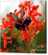Butterfly Dance Canvas Print