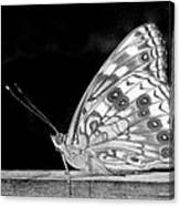 Butterfly In Black And White Canvas Print