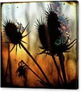 C Est La Vie Sunset Canvas Print