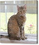 Cat In The Window Canvas Print
