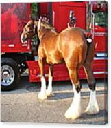 Clydesdale At Esp Canvas Print