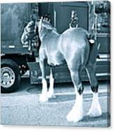 Clydesdale In Black And White Canvas Print