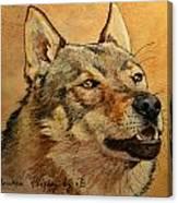 Czechoslovakian Wolfdog Portrait Canvas Print