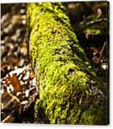 Dead Log With Moss Canvas Print