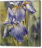 Double Blue Irises Canvas Print