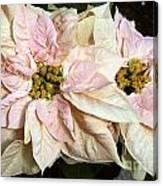 Euphorbia Marron Canvas Print