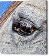 Eye Of A Horse Canvas Print