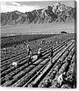 Farm Workers And Mount Williamson Canvas Print