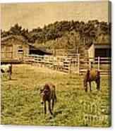 Feral Horses Of Ocracoke Canvas Print