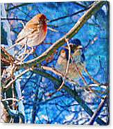 Finch And Blue Jay - California Winter Day Canvas Print