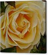 Golden Celebration Canvas Print