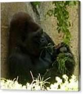 Gorilla Snacking Canvas Print