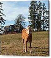 Horse Unbrideled Canvas Print