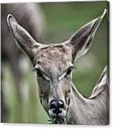 I Am All Ears Canvas Print