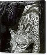 Jaguar Or Jacaranda  Canvas Print