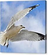 Jekyll Island Seagull Canvas Print