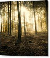 Kings Wood In Autumn Canvas Print