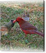 Kissing Cardinals Canvas Print