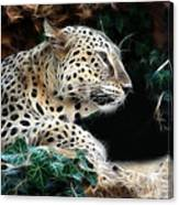 Leopard Watching It's Prey Canvas Print