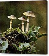 Little Mushrooms Canvas Print