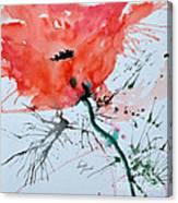 Lonely Poppy Canvas Print