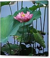 Lotus Flower At Calloway Canvas Print