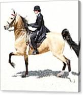 Lovely Gaited Buckskin  Canvas Print