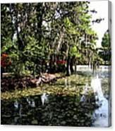 Magnolia Plantation Gardens Canvas Print