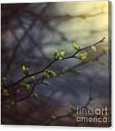 Natural Lightness Of Being Canvas Print