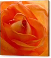 Orange Swirls Rose Flower Canvas Print