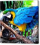 Parrot Greeting Card Canvas Print