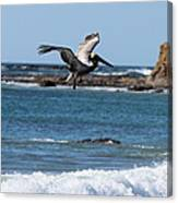 Pelican With Wet Feet Canvas Print