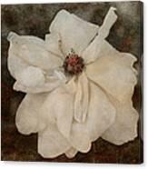 Perennial Gardens - Fall #02 Canvas Print