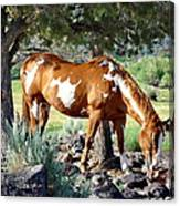 Pinto In The Pines Canvas Print