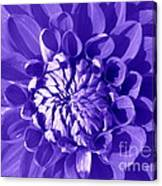 Pretty In Magenta Canvas Print
