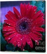 Red Gerbera Daisy Canvas Print