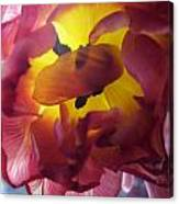 Rip Canvas Print