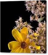 Shy Yellow Flower Canvas Print