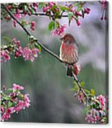 Singing In The Rain  2   Canvas Print