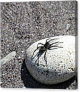 Spider In The Sun Canvas Print