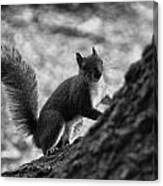 Squirrel In The Park V4 Canvas Print